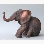 Ele. Elefantenjunges